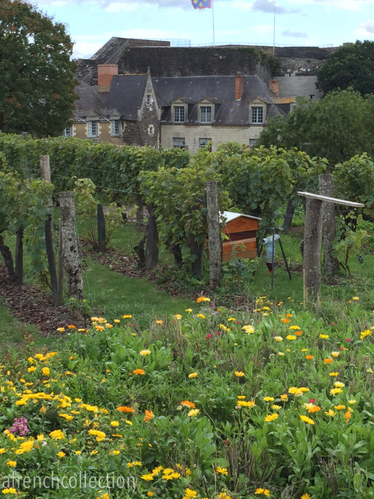 Chateau d'Angers beehives | a french collection
