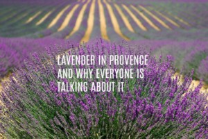 Lavender Provence text